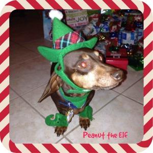 peanut elf